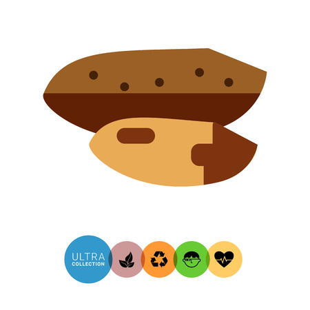 nutshell: Multicolored vector icon of Brazil nut with nutshell