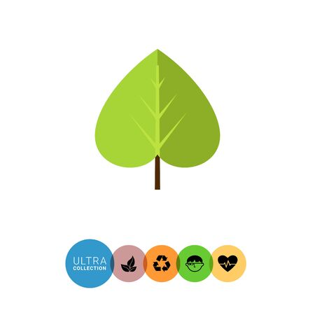 linden: Multicolored vector icon of green linden leaf
