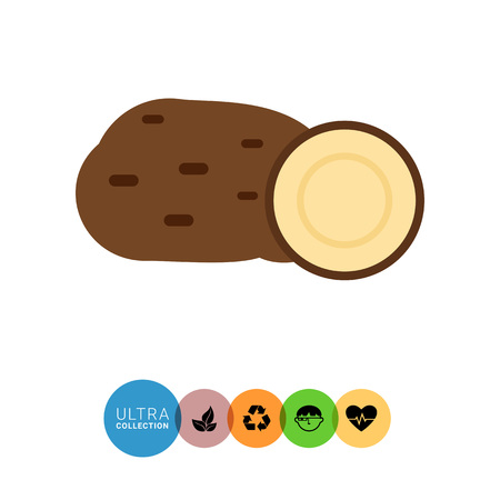 tuber: Vector icon of potato tuber and cut potato half