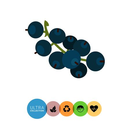 currant: Vector icon of ripe black currant bunch