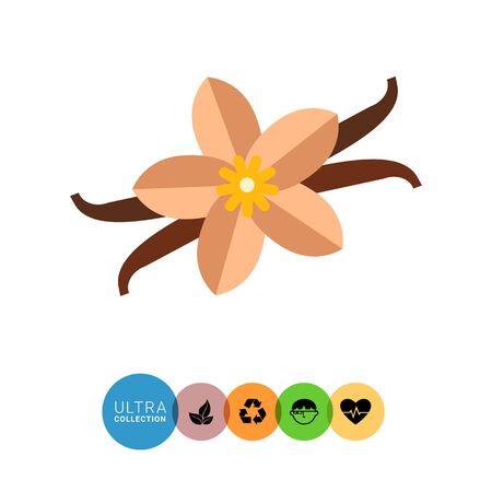 vainilla flor: icono de vectores multicolor de la flor de la vainilla y palillos Vectores