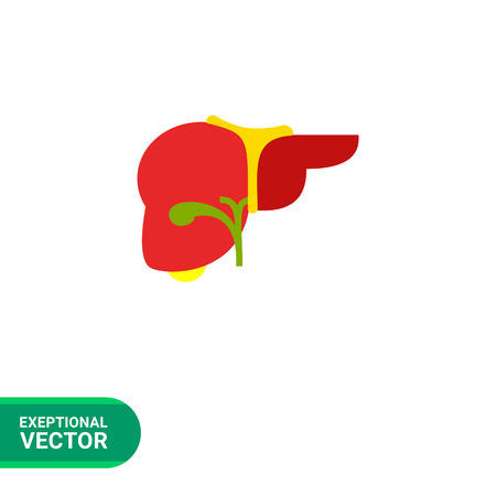 removing: Liver flat icon. Multicolored vector illustration of liver, organ of human body