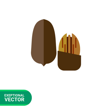 pecan: Multicolored vector icon of one whole pecan nut and one without nutshell