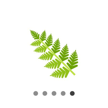 fern leaf: Fern leaf. Summer, fresh, forest. Leaf concept. Can be used for topics like botany, biology, environment.