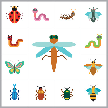 arthropod: Insects Icon Set. Ladybird Bee Beetle Mosquito Fly Brown Mite Butterfly Blue Beetle Mite Caterpillar Pink Worm Cute Caterpillar Ant