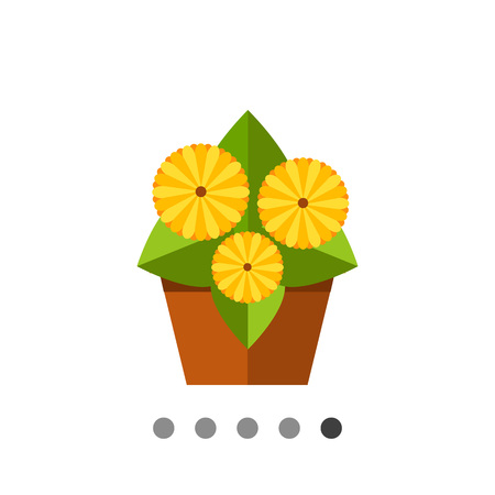 gerbera daisy: Multicolored vector icon of growing gerbera daisy in pot, three flowers, side view