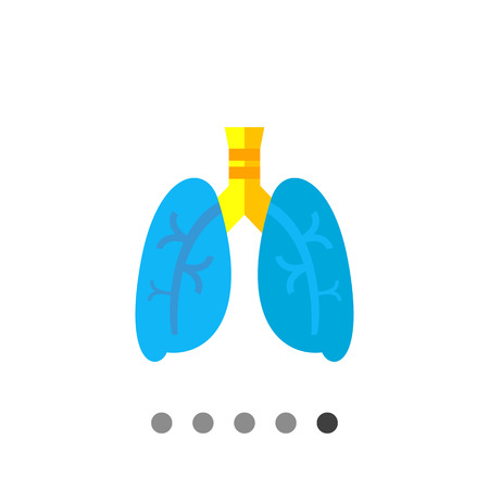 lobe: Lungs vector icon. Multicolored illustration of organs of human respiratory system