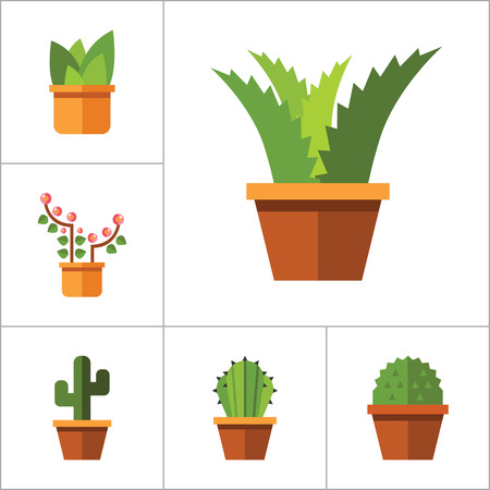 thirteen: Flowers vector icons set with aloe in pot, tulip and cactus in pot. Thirteen flat icons Illustration