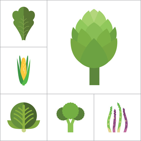 Green food icons set with broccoli, cauliflower and corn cob. Thirteen vector icons Illustration