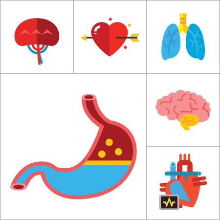 오르간 아이콘을 설정합니다. 심장 두뇌 신장 간 폐 심장 사랑 화살표 비장 대뇌 위장 알츠하이머 형 방광 인간 심장