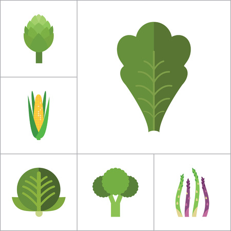 cauliflower: Green food icons set with broccoli, cauliflower and corn cob. Thirteen vector icons Illustration
