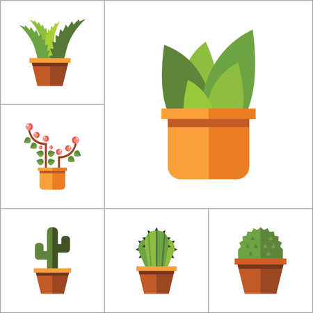 aloe vera plant: Potted Flowers Icon Set. Money Tree Cactus In Pot Cactus And Spray Bottle Plant Blooming Flower Chinese Peach Tree Cactus Red Flower Cactus In Flower Pot Tree In Pot Aloe Vera