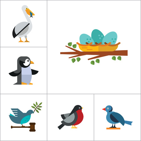 titmouse: Birds Icon Set. Birdhouse Nest With Eggs Bullfinch Bird Sitting On Branch Blue Bird Dove With Olive Twig Flying Bird Parrot Pelican And Fish Titmouse Toucan Puffin Penguin
