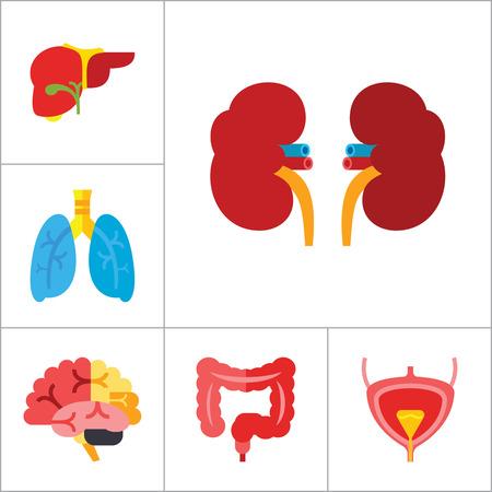 cerebrum: Organs Icon Set. Heart Brain Kidneys Liver Lungs Heart With Love Arrow Spleen Cerebrum Stomach Intestine Alzheimer Bladder Human Heart