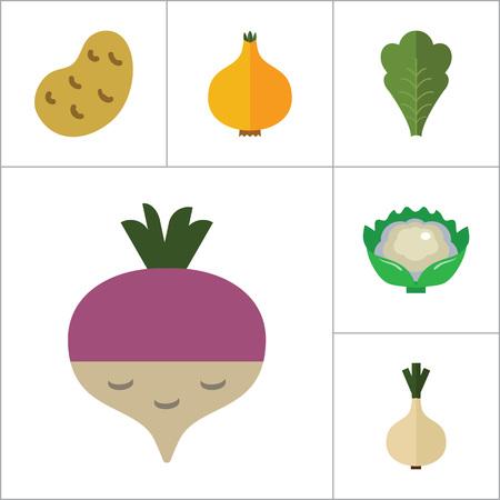 thirteen: Green food icons set with broccoli, cauliflower and corn cob. Thirteen vector icons Illustration