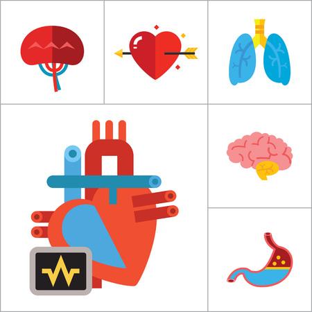 오르간 아이콘을 설정합니다. 심장 두뇌 신장 간 폐 심장 사랑 화살표 비장 대뇌 위장 알츠하이머 형 방광 인간 심장 스톡 콘텐츠 - 63871318