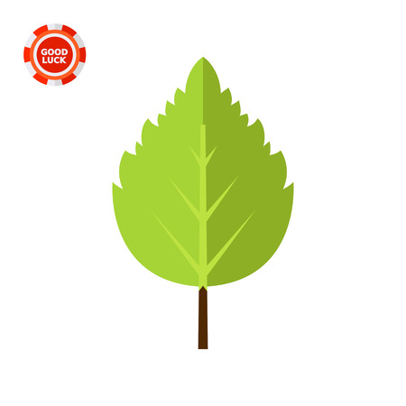 birch leaf: Birch leaf. Summer, fresh, tree. Leaf concept. Can be used for topics like botany, biology, environment.