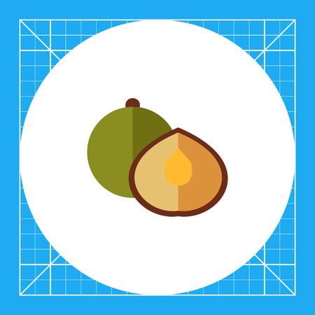 Multicolored vector icon of whole coriander seed and half