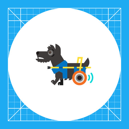infirmity: Disabled dog moving with help of prosthesis. Disability, injury, aid. Care of disabled animals concept. Can be used for topics like disability, care, veterinary medicine.