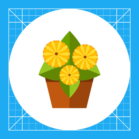 gerbera: Growing gerbera daisy in pot, three flowers, side view. Decorative, blossom, indoors. House plant concept. Can be used for topics like plant growing, flowers, botany.