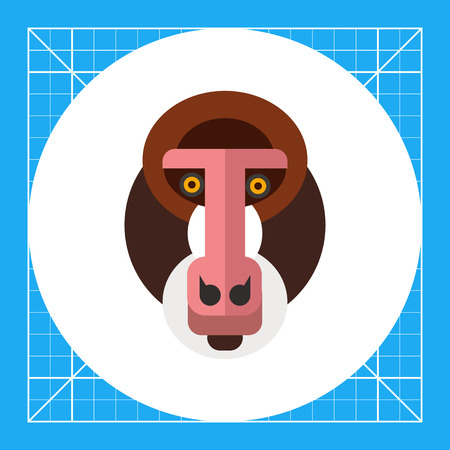 Multicolored vector icon of wild mandrill head