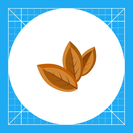Three dry tobacco leaves. Nicotine, addiction, nature. Smoking concept. Can be used for topics like smoking, industry, health, botany.