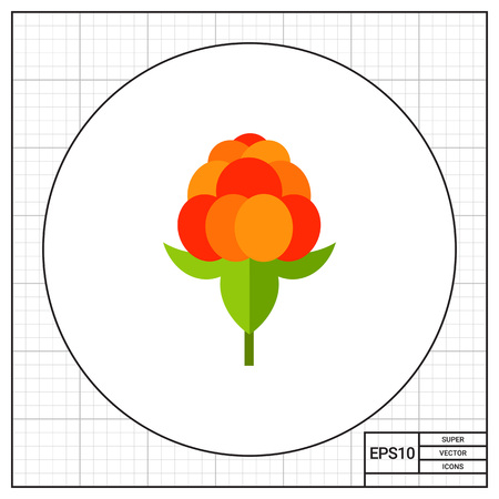 chicouté: Single cloudberry with leaves. Sweet, juicy, forest. Berries concept. Can be used for topics like food, medicine, health. Illustration