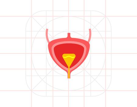 uretra: La vejiga del icono del vector