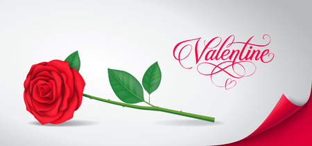 Valentine calligraphic lettering with rose on peeled paper with red curled corner. Valentines day, love, romance. Handwritten text, calligraphy. Can be used for greeting cards, posters, leaflets