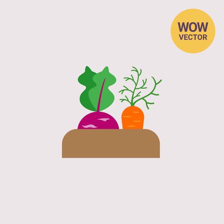 Growing kohlrabi and carrot