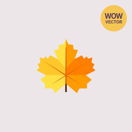 Maple yellow leaf
