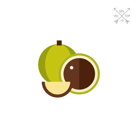 Vector icon of macadamia. Tropical nut, Hawaiian plant, edible plant. Hawaii concept. Can be used for topics like tropical flora, Hawaiian food, agriculture