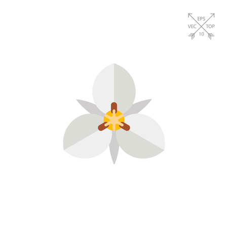 White mariposa flower icon Illustration