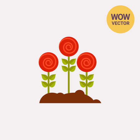 Three red roses growing in soil. Flowerbed, floriculture, rose garden. Gardening concept. Can be used for topics like botany, gardening, leisure and hobby