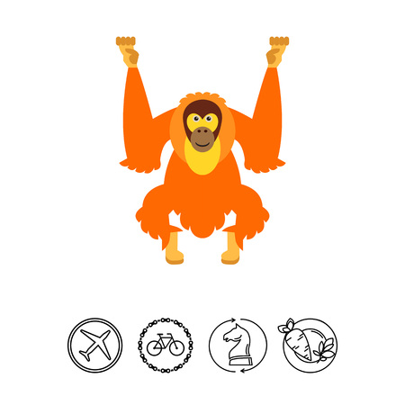 Orangutan. Animal, funny, forest. Monkey concept. Can be used for topics like zoology, biology, environment.