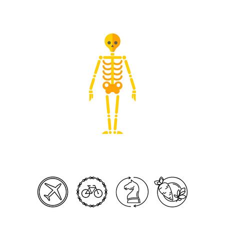 sternum: Icon of human skeleton. Framework of body, bones, biology. Medicine concept.