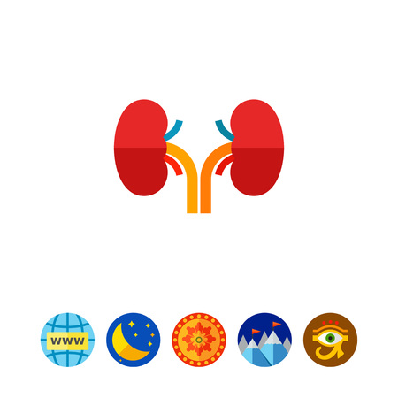 Multicolored vector icon of kidneys, human internal organs