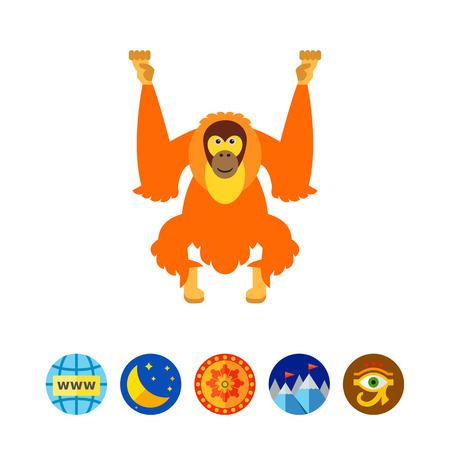 primate biology: Isolated Orangutan Icon