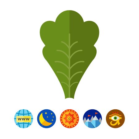Lettuce leaf icon