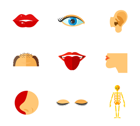 Human face parts icon set contains bonus icon Skeleton. Lips Eye Ear Forehead Tongue Chin Nose Lashes Illustration