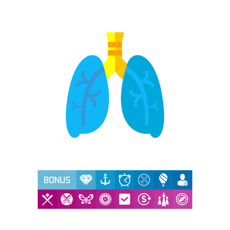 respiration: Lungs illustration for respiratory system organ concept. Can be used for topics like organs, anatomy, and health care