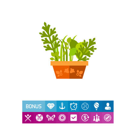 oregano: Vector icon of various herbs growing in pot. Herbal garden, houseplant, spices. Herbs concept. Can be used for topics like plants, biology, health