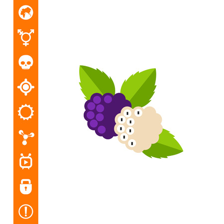 Purple and white mulberries with leaves. Sweet, dessert, tree. Berries concept. Can be used for topics like food, medicine, health. Çizim