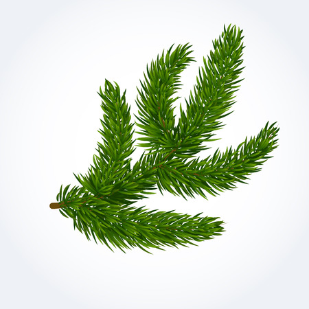 Green tree branch. Evergreen, thorny, twig, decoration. Forest concept. Can be used for greeting cards, posters, leaflets and brochure Illustration