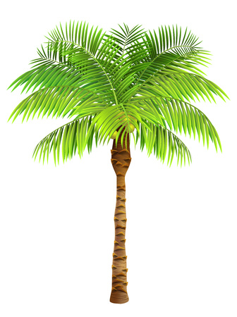 Coconut palm tree. Plant, garden, resort. Nature concept. Can be used for topics like vacation, travelling, botany Hình minh hoạ