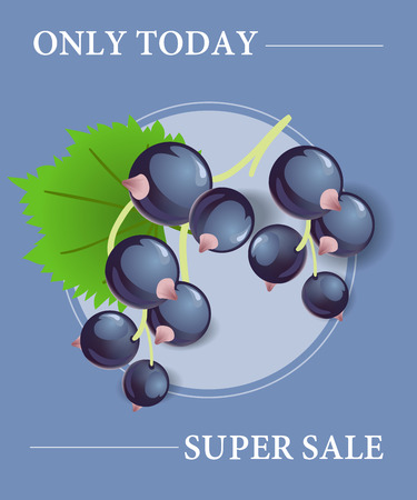 Only today super sale poster design with black currant berries in round frame on blue background.