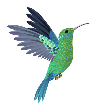 Beautiful flying hummingbird. Design element. Vettoriali