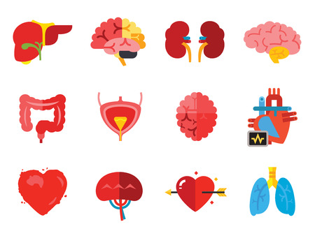 Anatomy Icon Set. Heart Brain Kidneys Liver Lungs Heart With Love Arrow Spleen Cerebrum Stomach Intestine Alzheimer Bladder Human Heart