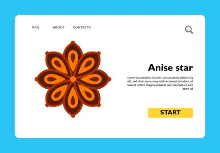 Multicolored vector icon of anise star flower