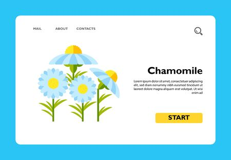Vector icon of group of chamomiles. Wildflower, spring, meadow. Herbs concept. Can be used for topics like flowers, plants, seasons